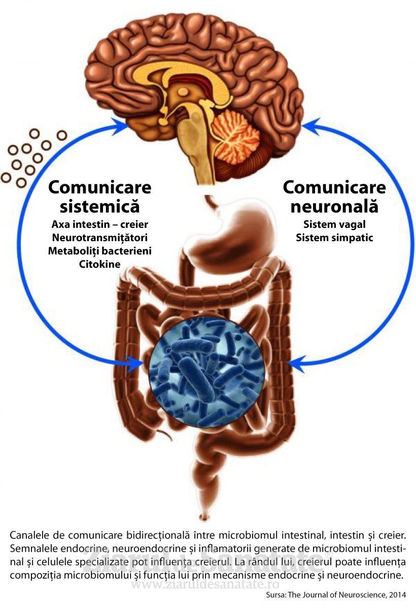 Infografie Axa creier - intestin